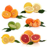 Citrus Fruit Collection Stock Image