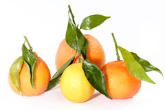 Citrus fruit collection Royalty Free Stock Image