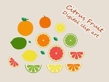 Citrus Fruit digital clip art vector stock illustration