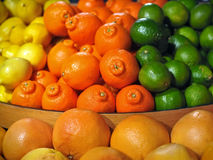 Citrus Fruit Display with Oranges, Lemons, Limes. A fruit stand display of brightly colored citrus fruits, including limes, tangelos, oranges, lemons, and Stock Images