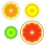 Citrus fruit fresh ripe sliced symbols stock illustration
