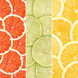 Citrus-fruit Royalty Free Stock Photo