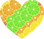 Citrus fruit heart. Isolated on white. Vector Stock Image