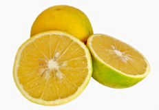 Citrus fruit. Isolated slices of citrus fruit Royalty Free Stock Photo