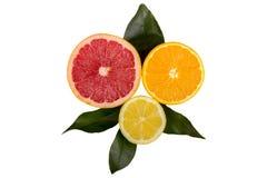 Citrus fruit with leaves. Citrus fruit  lemon, orange, grapefruit  with leaves isolated on white background Royalty Free Stock Photography