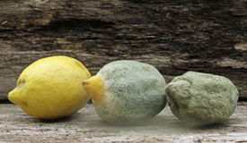 Citrus fruit lemon and mold. On old oak wood stock photography