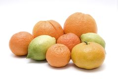 Citrus fruit mix Stock Image