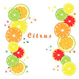 Citrus fruit orange. Abstract vector illustration logo for ripe citrus fruit orange,lemon,lime,grapefruit,pomelo,cut sliced.Citrus:peel fruits lemons,ripe limes Stock Photos