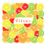 Citrus fruit orange Royalty Free Stock Images