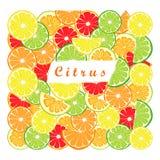 Citrus fruit orange. Abstract vector illustration logo for ripe citrus fruit orange,lemons,lime,grapefruit,pomelo,cut sliced.Citrus:peel fruits lemons,ripe limes Royalty Free Stock Images
