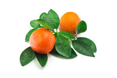 Citrus fruit Royalty Free Stock Photos