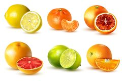 Citrus Fruit Set stock illustration