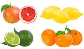 Citrus Fruit Set  isolated on white background. Citrus Fruit Set tangerine, grapefruit, lime, lemon isolated on white background Royalty Free Stock Image