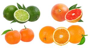 Citrus Fruit Set  isolated on white background. Citrus Fruit Set tangerine, grapefruit, lime, orange isolated on white background Royalty Free Stock Photos