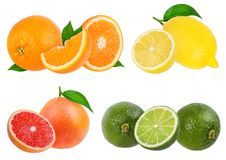 Citrus Fruit Set orange, grapefruit, lime, lemon isolated. On white background stock image
