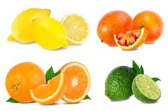 Citrus Fruit Set orange, grapefruit, lime, lemon isolated on white. Background Royalty Free Stock Photo