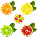 Citrus Fruit Set Royalty Free Stock Image