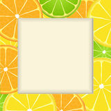 Citrus fruit slice frame background Stock Photography