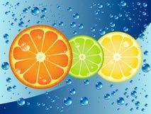 Citrus fruit slices stock illustration