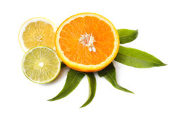 Citrus fruit slices Stock Images