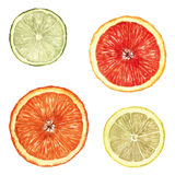 Citrus Fruit Slices Stock Photography