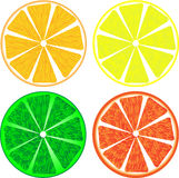 Citrus fruit slices isolated on white Stock Photography