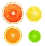 Citrus fruit slices isolated Stock Photography