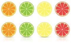 Citrus Fruit Slices. Orange, Lemon, Lime and Grapefruit Citrus Fruit Slices royalty free illustration