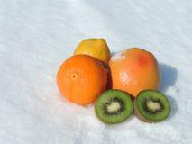 Citrus Fruit on Snow. Colorful citrus fruit - orange, grapefruit, lemon and kiwi on snow Stock Photos