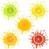 Citrus Fruit in Splashes of Juice Stock Image