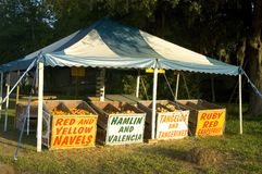 Citrus fruit stand. A fruit stand on the side of the road. Selling navel oranges and grapefruit. Honor system used royalty free stock photo