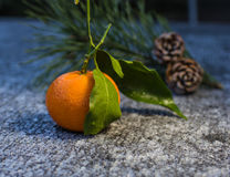 Citrus fruit-tangerine and  two pine cone in the winter Stock Image