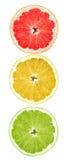 Citrus fruit. Traffic lights from pieces of citrus fruit: lime, lemon, grapefruit Stock Image