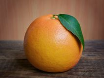 Citrus fruit from a tree, Grapefruit. Breaked citrus fruit from a tree, Grapefruit royalty free stock photos