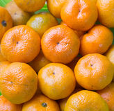 The citrus fruit. Royalty Free Stock Photography