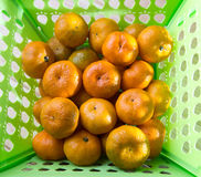The citrus fruit. Royalty Free Stock Image