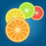 Fruit Cytrus. Citrus fruit for your design in the EPS file everything is aligned in layers carefully so that you can change what you want Royalty Free Stock Image