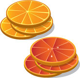 Citrus Fruits. Illustration of orange and grapefruit slices Stock Image