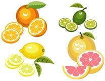 Citrus fruits. Illustration of four citrus fruits - grapefruit, lemon, lime and orange Stock Photo
