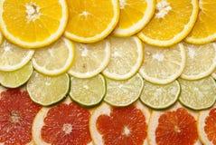 Citrus fruits. Citrus fruit cut into slices Royalty Free Stock Photos