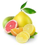 Isolated pile of citrus fruits stock image