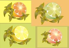 Citrus fruits. Stock Photo