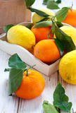 Citrus fruits. With leaves in the basket Royalty Free Stock Photos
