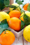 Citrus fruits. With leaves in the basket Stock Photos