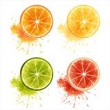 Citrus fruits. Set of ripe citrus fruits  - orange, lemon, lime, grapefruit. EPS10 Stock Image