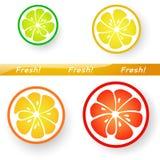 Citrus Fruits Royalty Free Stock Image