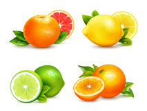 Free Citrus Fruits 4 Realistic Icons Set Royalty Free Stock Photography - 83261967