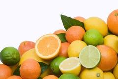 Citrus fruits. Lemon, orange, lime, tangerine and grapefruit on white background Royalty Free Stock Photography