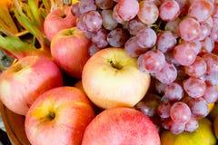 Citrus fruits. Stock Photos