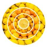 Citrus Fruits Background Stock Image